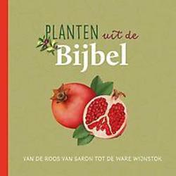 Planten uit de Bijbel