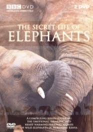 Secret Life Of Elephants
