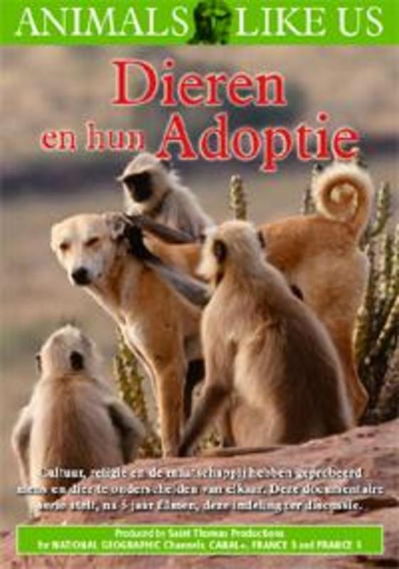Dieren En Hun Adoptie