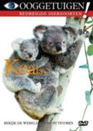 Ooggetuigen-Koala's