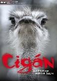 Cigan, (DVD) PAL/REGION 2 // BY MARTIN SULIK