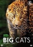 Big cats, (DVD)